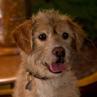 Baxter_Anchorman2_image